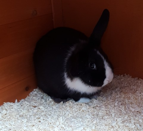 Anya's Rabbit - Poppy